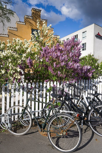 biciclete Copenhaga
