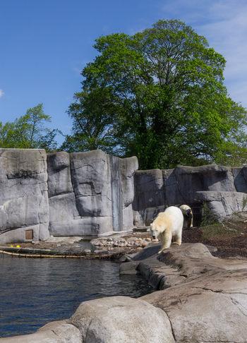 urs polar zoo Copenhaga
